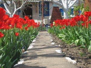 Эх, хороша жизнь! Весна! Вот такая вот Аллея Тюльпанов!