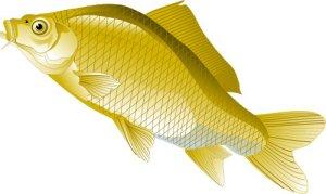 Рыба, Чистая вода. векторный клипарт Corel Xara.  Золотой карп.