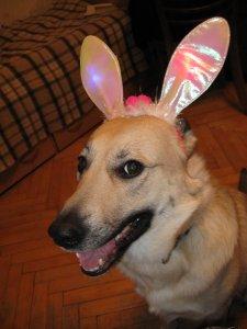 А это мой кролик!!:))))