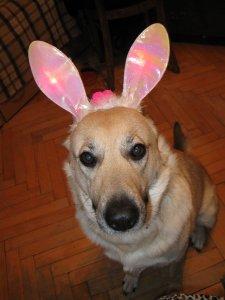Мой кролик.