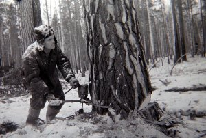 Интересно, а в Британии осуждённые лес валят или каналы роют? По-моему, Чарли Гилмор засиделся в городе, как говаривал Жеглов и на этот раз ему добудут кайло в руки.