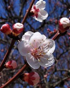 Вот такая весна в провинции наступила...