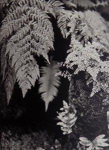 Kew ferns 1998