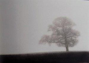 Oak in mist 1985