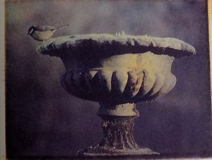 Blue tit on urn 1978