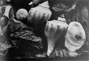 Table top shells 1996