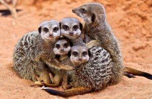 Крепкая семья.