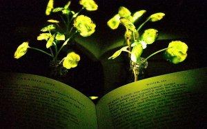 Страницы Потерянного рая Мильтона подсвечены генетически изменёнными растениями Настурции водяной, в просторечии жируха.
