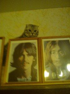 У настоящего битломана и кот-битломан!