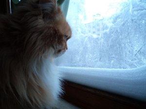 Моя девчонка с балкона наблюдает за последствиями снегопада.