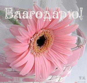 Благодарю за добрые поздравления!) Всем здоровья и мира!