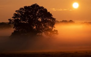 National Trust Hatfield Forest, Essex by Dave Clarke Photography