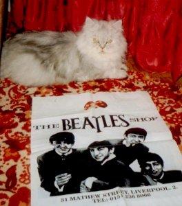 Когда покупали эту персидскую шиншиллу, выяснилось, что она появилась на свет 18 июня (!) и что по правилам (зависит от имен родителей) ей нужно было придумать имя на букву П. Если бы был кот, то стал бы Полом. А поскольку кошка - нарекли ПОЛиной.