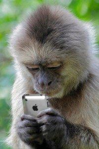 >А есть не какающая обезьянка?