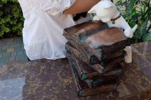 Очередной одесский котик - Кот Учёный!