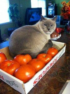 По самые помидоры