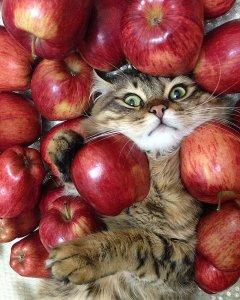 В ожидании Яблочного спаса.