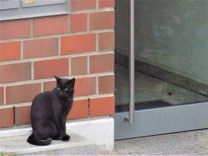 Мой сосед, пересекемся