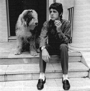 Интересно, как собаку на фото зовут?