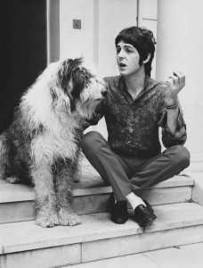 Paul McCartney seated on outdoor steps with his sheepdog, Martha.
