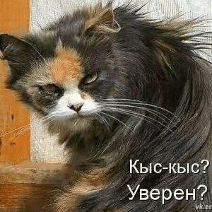 Продолжая про котов