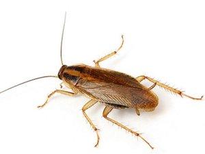 2Yavin:  >Это же обычный таракан.   Обычный  таракан с усами !