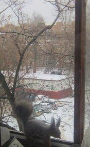 Cегодня набежали уже три. После быстрого набега с утаскиванием пяти орехов последней пришлось тащить лаваш. Балкон обследовала изнутри весь.