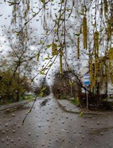 второго дня дожди...