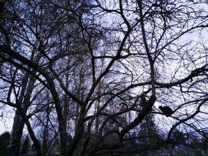 Сколько котов на дереве?