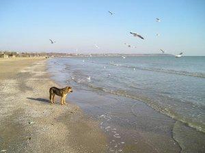 Кстати, вот и сегодняшняя прогулка по Лузановке... Типа Местный пёс, бегущий краем моря...)