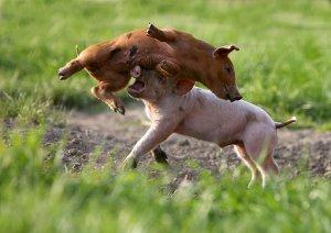 Станьте вегетарианцем с Полом Маккартни!