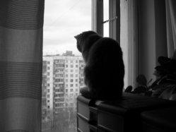 А вот грустный котик...
