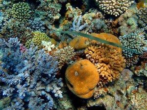 рыбы красного моря фото.