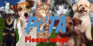 Битлз разрешили некоммерческой организации Люди за этичное обращение с животными ( PETA)  использовать песню  Can't Buy Me Love  для новой кампании. Об этом сообщает   Examiner .  С помощью битловского хита  PETA  призывает людей брать домашних питомцев из приютов.